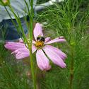 bee,beetle