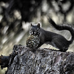 Dinner Time by Sue Green - Animals Other ( looking at you, animals, squirrels, food, acorns,  )