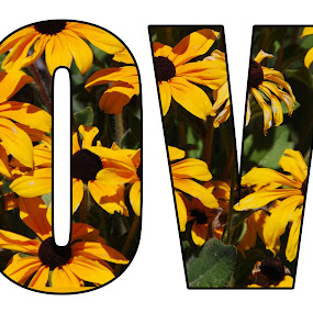 Daisy Love  by Nancy Lowrie - Typography Words ( love, creation, text, art, daisies, postcard, valentine's day )
