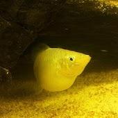 Aquarium Volume & Weight