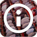 Info Jadwal Shalat icon