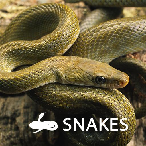 蛇 書籍 App LOGO-硬是要APP