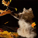 Autumns Kitty Live Wallpaper