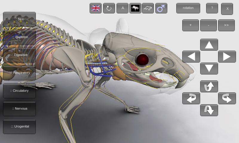 3d Rat Anatomy On Google Play Reviews Stats
