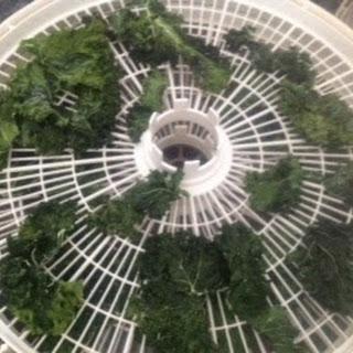 Delicious Kale Chip Recipe