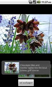 Alaska's Wild Flowers Pro screenshot 5