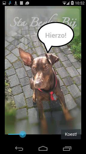 Sta Beyke Bij blinde hond
