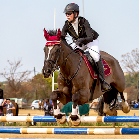 SA Show jumping nationals by Ian Damerell - Sports & Fitness Other Sports ( rider, horse, show jumping, sport, equestrian )