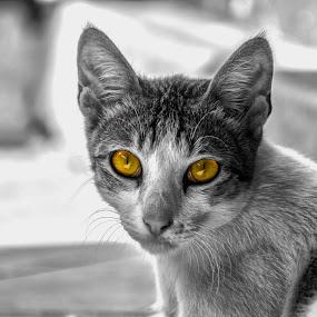 Mighty Cat by Pritam Saha - Animals - Cats Portraits ( cat, monochrome, animal, #GARYFONGPETS, #SHOWUSYOURPETS,  )