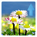 Daisy Flowers Live Wallpaper logo