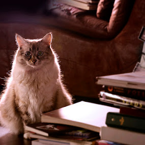 Librarian by Ryan Li - Animals - Cats Kittens ( garyfong, cat, kitten, pet, contest, animal, #GARYFONGPETS, #SHOWUSYOURPETS )