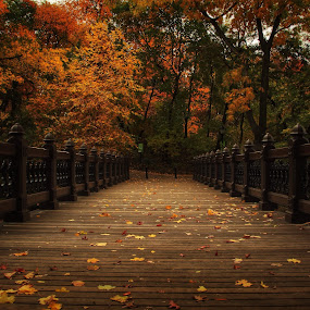 Oak Bridge by Katsuhiro Kaneko - City,  Street & Park  City Parks ( canon, oak bridge, manhattan, travel, nyc, new york, ny, central park, fallen leaves, city, fall leaves on ground, eos, season, autumn, color, foliage, fall, coloration, bridge, bank rock bay )