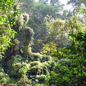 green waterfall by Nisha B. - Landscapes Forests ( chintamani kar wildlife sanctuary, kolkata, plants, forest, ckbs,  )