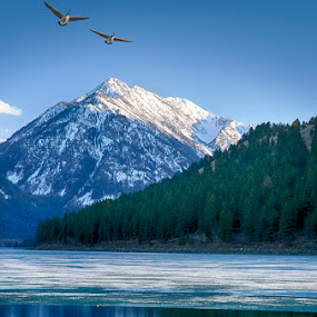 Waiting for the Ice to Melt by Tom Reiman - Landscapes Mountains & Hills ( oregon, mountain, in-flight, willowa lake, geese,  )
