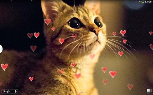 可愛貓咪 動態桌布