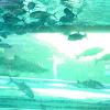 Sun fish, nurse shark