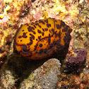 Marten's Sidegill Slug