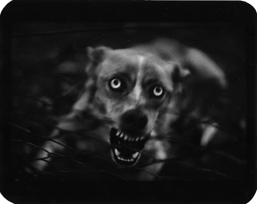 From the series The Animals by Giacomo Brunelli