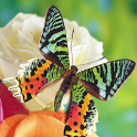 Butterflies Jigsaw Puzzles icon