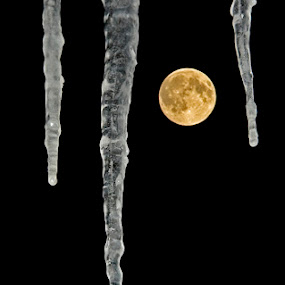 Icy Moon by Jeff Galbraith - Landscapes Starscapes ( moon, winter, cold, full, ice, icicles, dark, night )