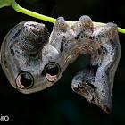 Fruit-piercing Moth (larva)