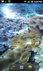 Hot Tropical Corals LWP