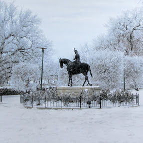 Her Magesty in the Park by Tammy Drombolis - City,  Street & Park  City Parks (  )