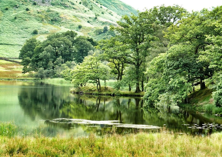 Rydal Water, The Lake District by Sue Walker - Landscapes Waterscapes ( water, tranquil, reflection, peaceful, serene, green, trees, scenery )