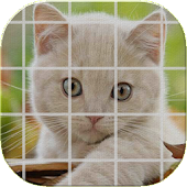 Tile Puzzle Cats (NoAds)