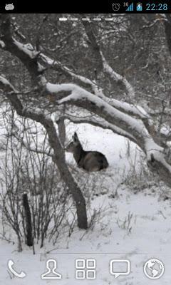 Winter Deer Live Wallpaper - screenshot