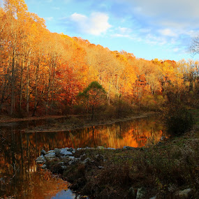 by Missy Grove Horne - Landscapes Forests ( , fall, color, colorful, nature )