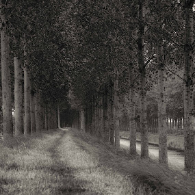 Belgium Backroad by Bob Stafford - Landscapes Forests ( black and white, trees, belgium, 2 track, woods )