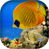Coral Reef Aquarium HD LWP