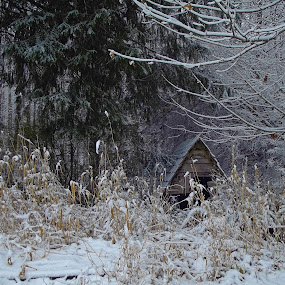 Dilapidated Chicken Coop by Art Straw - Landscapes Weather ( old, winter, coop, snow, buildings, trees, cold )