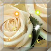 Rose Best Love live Wallpaper