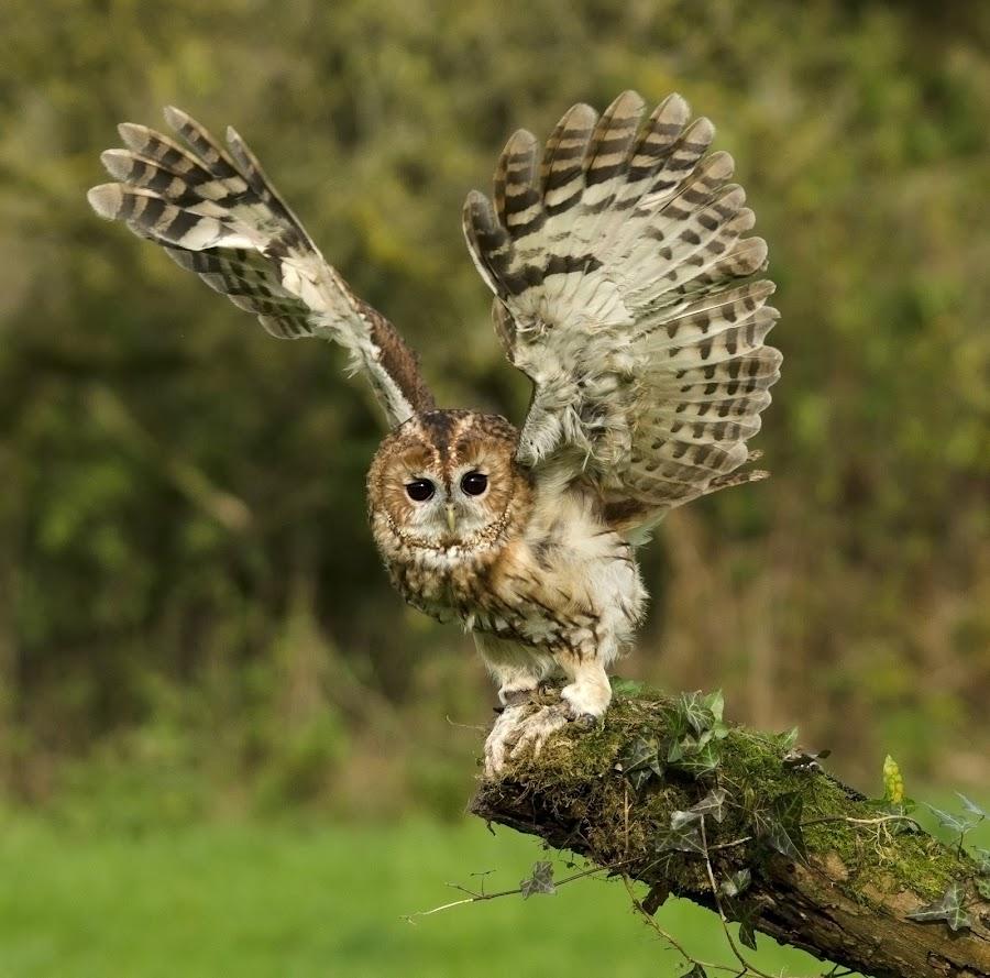 by Stephen Root - Animals Birds