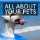 All About Your Pets
