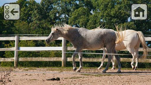 Free 100 Horses 10+ Videos