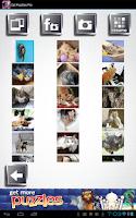 Screenshot of Cat Puzzles - 25+ Free Puzzle