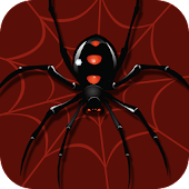 Spider Solitaire (Card Games)