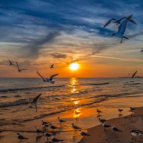by Victor Martin - Animals Birds (  )