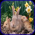 Rabbit Wallpaper icon