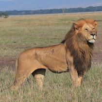 African Mammals in the Wild