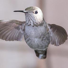 Humming Bird Hug by Jim Malone - Animals Birds