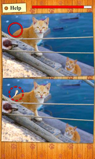 找出不同之處 - 貓貓