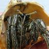 Thin striped hermit crab