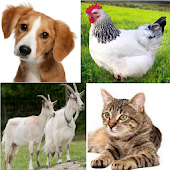 Animal Sounds for childs (6-12)