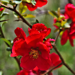 RED by Richard Moyen - Flowers Flowers in the Wild ( red, nature, trail, sticks, stems, leaves, woods, flower )