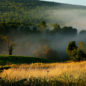 Lifting Fog by Mary Gerakaris - Landscapes Mountains & Hills ( new hampshire hills, nature, foggy landscapes, grassy hills, fog lifting, late summer landscapes, natural beauty, golden hour, sunset, sunrise, , renewal, green, trees, forests, natural, scenic, relaxing, meditation, the mood factory, mood, emotions, jade, revive, inspirational, earthly )