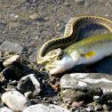 Snake & Fish